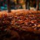 pielęgnacja mebli na jesień