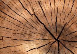 zagrożenia dla drewna